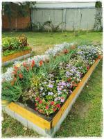 Kocsis Pál Mezőgazdasági és Környezetvédelmi Technikum és Szakképző Iskola kertje