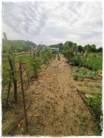 Mészáros Gyuláné kertje